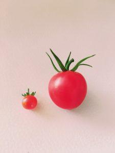 マイクロトマトが何とも可愛い
